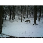 ForestCam LS870