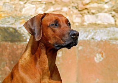 Velký TEST granulí pro psy a srovnání nejprodávanějších v Čr a vítězných v Německu