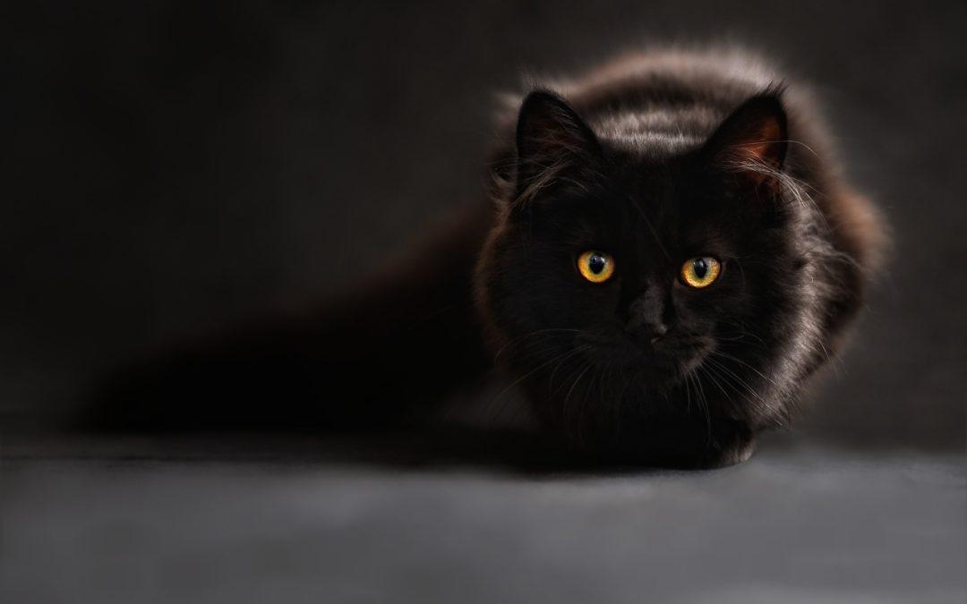 Vybíráme granule pro kočky + srovnání 15 oblíbených granulí