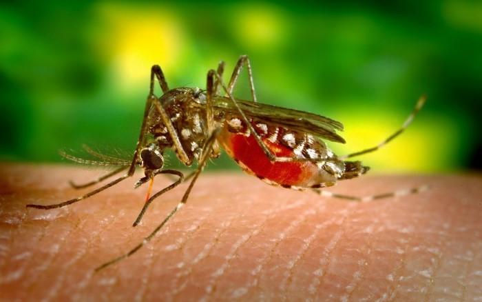 Návod na domácí past na komáry a mouchy