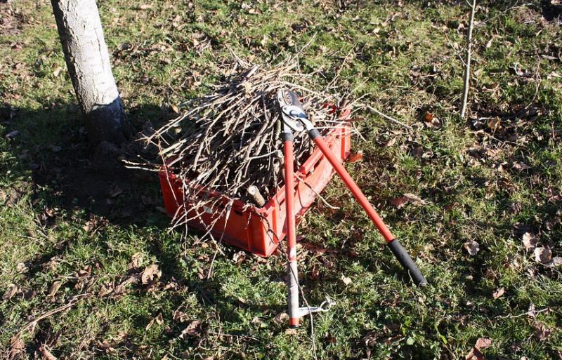 Únorové úkoly v péči o zahradu