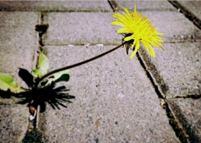 Jak se účinně zbavit plevelu v dlažbě