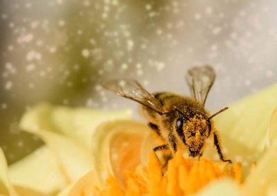 Jak přilákat opylující hmyz na zahradu?
