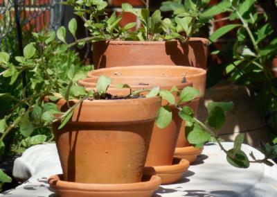Tipy, jak využít ocet v zahradě