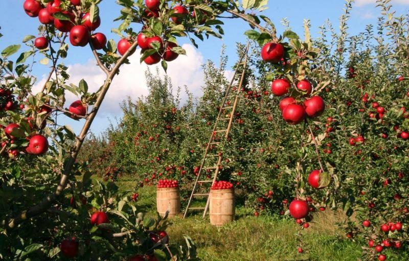 Jak zbavit ovoce škodlivých pesticidů