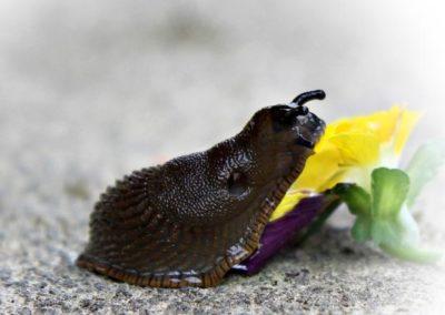 Jak vyzrát na slimáky přírodní cestou