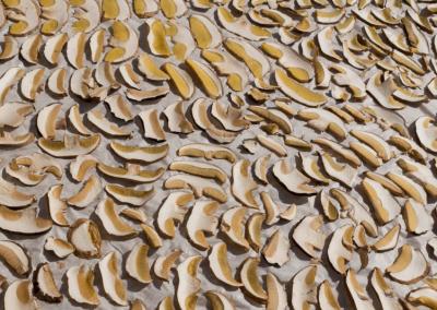 Jak správně sušit a skladovat houby