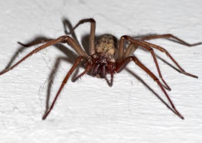 Jak šetrně a zároveň účinně vyhnat pavouky z domů a bytů