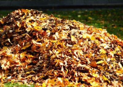 Pomůžeme Vám vybrat vhodného pomocníka na úklid podzimního listí. Vysavače a fukary listí.