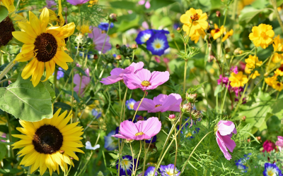 Zahrada v srpnu: na co nezapomenout